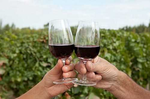 melhores vinhos 02
